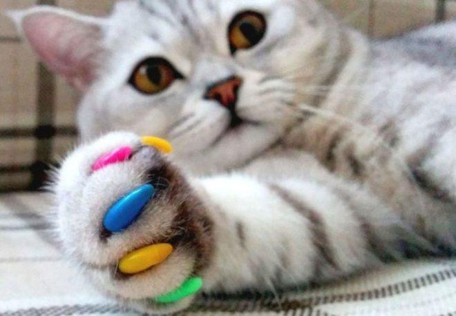 Разноцветные колпачки на когтях