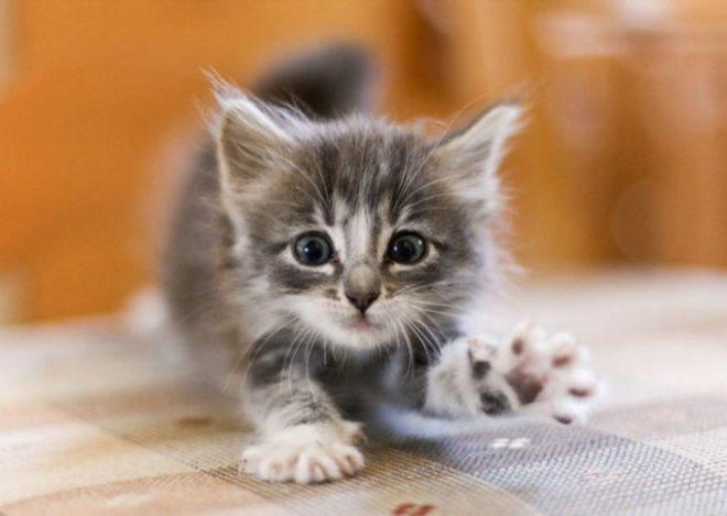 Котенок потягивается